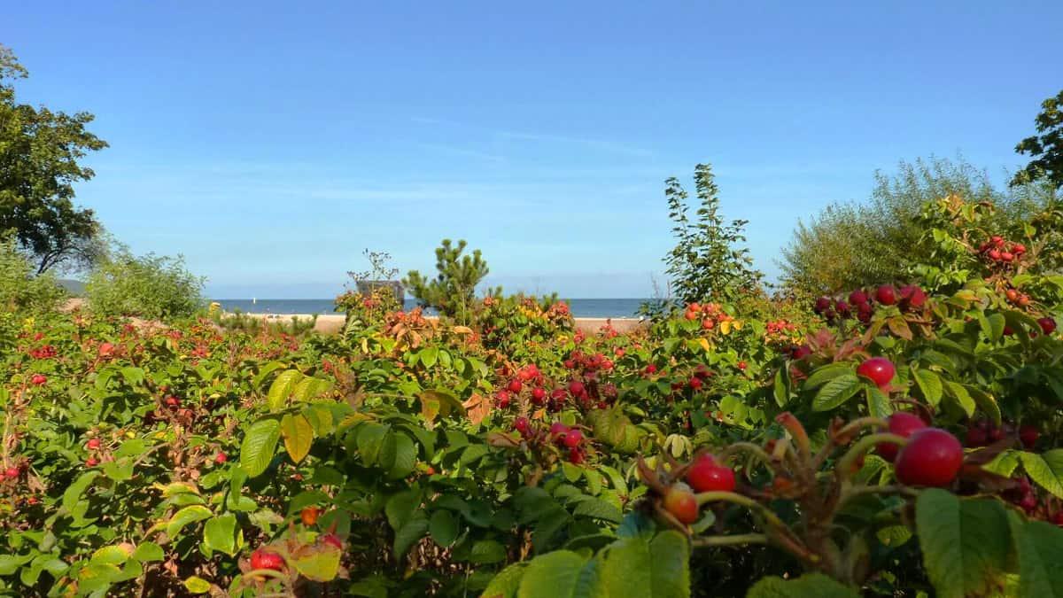 Sopot beach on a beautiful day