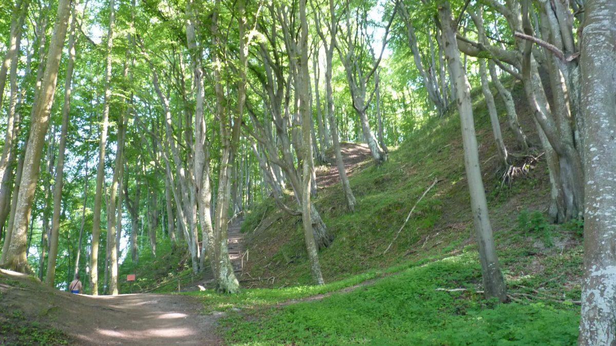 Rezerwat Przyrody Przylądek Rozewski