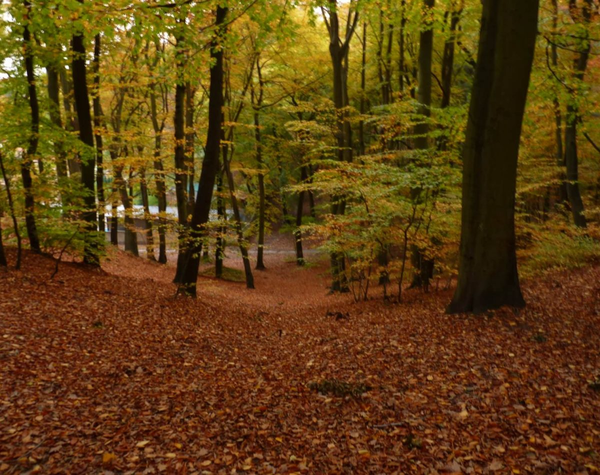 Złota Polska Jesień - Jaskowa Dolina, Gdansk